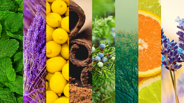 pictures of plants that essential oils are derived from such as lemon and cinnamon.